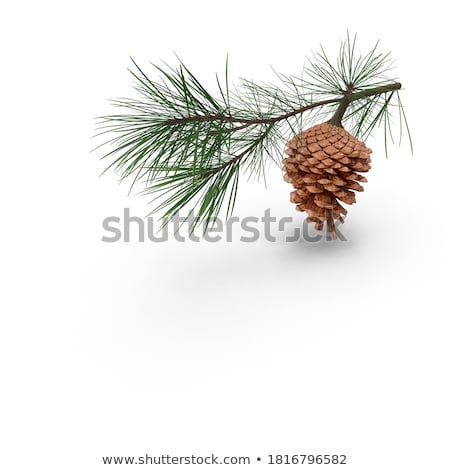 Dekore edilmiş çam Noel dekorasyon ahşap Stok fotoğraf © photochecker