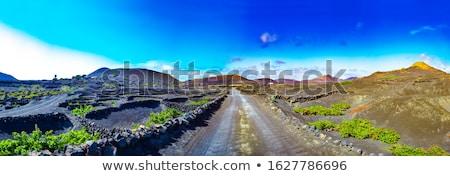 la · wijngaard · zwarte · vulkanisch · bodem - stockfoto © meinzahn