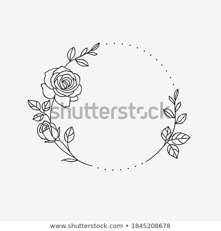 Egyszerű díszítő rózsa fehér szirmok citromsárga Stock fotó © AlessandroZocc