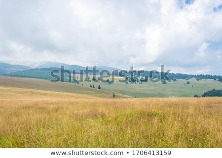 Stock fotó: Testtartás · reggel · köd · farm · magas · hegyek