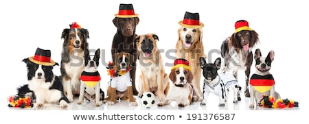 Puppy with Germany jersey Stock photo © kb-photodesign