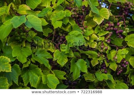 Eski bahçe ABD 2015 ev Stok fotoğraf © meinzahn