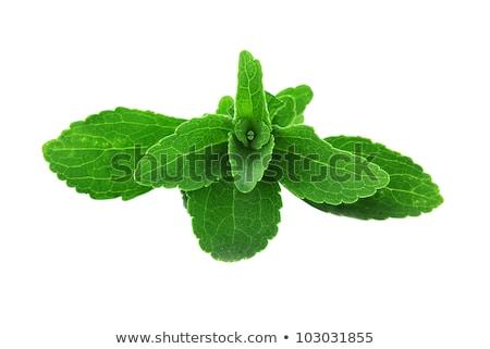 Sweetleaf, sugar leaf or Stevia rebaudiana, paths Stock photo © maxsol7