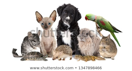 Set of differents pets Stock photo © colematt