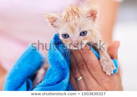 Foto stock: Funny · cute · jengibre · gatito · secar · bano