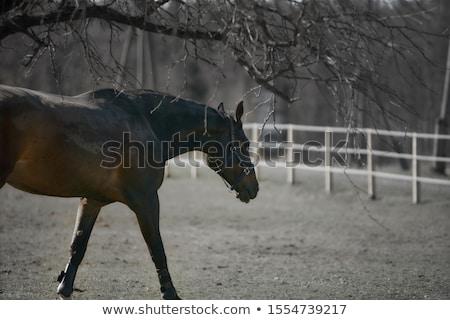caballo · campo · otono · luz · del · sol - foto stock © photoblueice