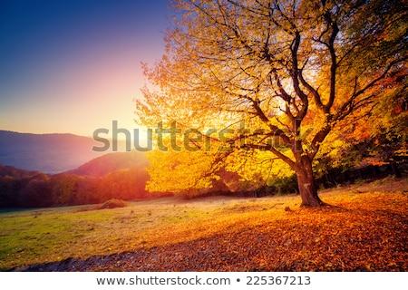 гор осень луговой французский лес снега Сток-фото © skylight