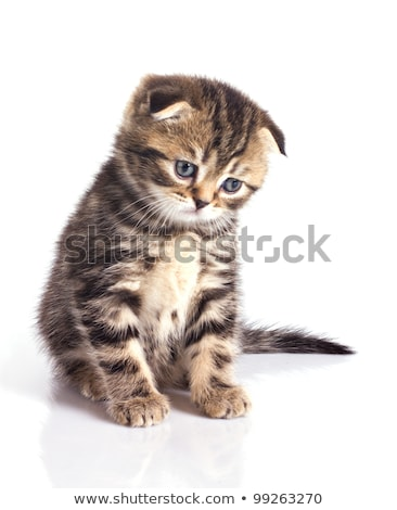 tristesse · chaton · yeux · espace · blanche · chatte - photo stock © broker