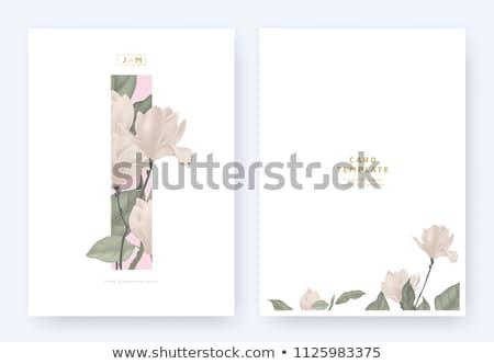 цветочный назад визитной карточкой три Сток-фото © liliwhite