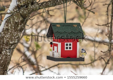 casa · jardim · pássaro · parque · telhado · ninho - foto stock © thanarat27