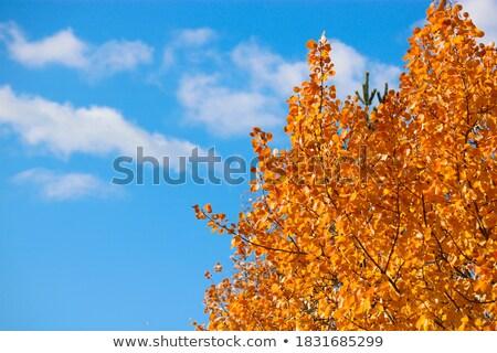 autumn colored leaf on blue sky stock photo © beholdereye