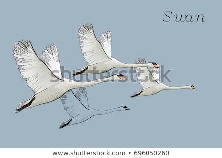 Voador belo branco cinza nublado outono Foto stock © stevanovicigor