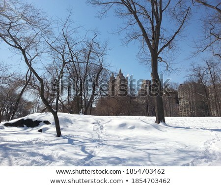 Bare trees covered in snow on skyline Stock photo © backyardproductions