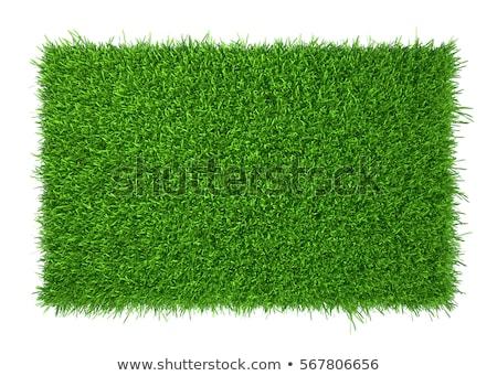 Yeşil ot çim çayır çim 3D Stok fotoğraf © Wetzkaz