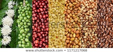 cherry coffee beans Arabica In nature Stock photo © artrachen