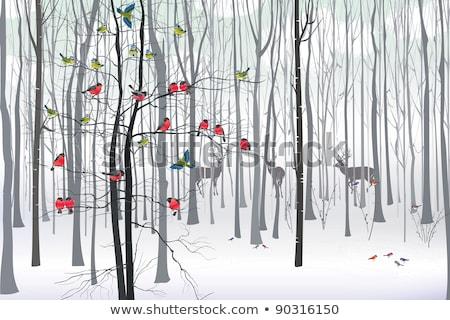 синий сиськи птица дерево Рождества иллюстрация Сток-фото © adrenalina