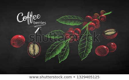 green grains of coffee on the branch of coffee tree stock photo © boggy