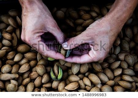Oogst amandelen boomgaard Spanje jonge Stockfoto © nito