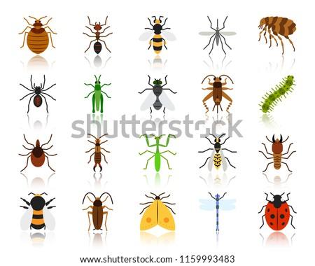 Pók szín ikon árnyék állat természet Stock fotó © Imaagio