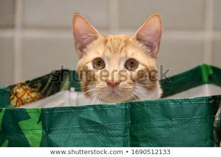 sweet cat in bag stock photo © pterwort