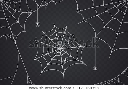 Spinneweb 10 ontwerp groene najaar spin Stockfoto © LianeM