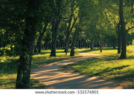 Giungla foresta parco Texas outdoor natura Foto d'archivio © lunamarina