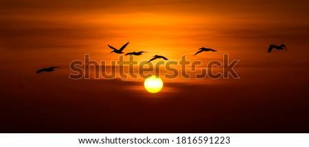 pelicans in a tree stock photo © hofmeester
