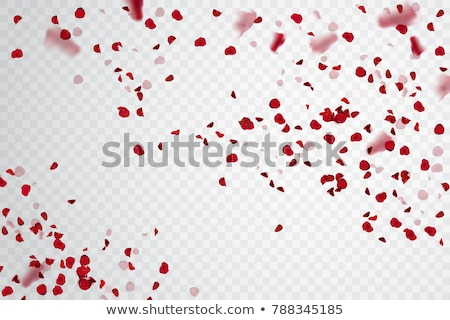 beautiful heart of pink rose petals and greeting card isolated o Stock photo © tetkoren