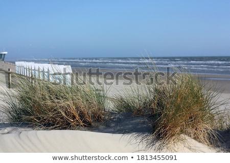 Güzel doğa yaz tatili plaj orman Stok fotoğraf © Morphart