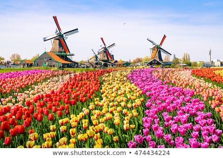 fırıldak · Hollanda · seyahat · değirmen · açık · bir - stok fotoğraf © phbcz