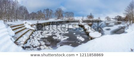 зима · дерево · берега · озеро · Онтарио · парка - Сток-фото © steffus