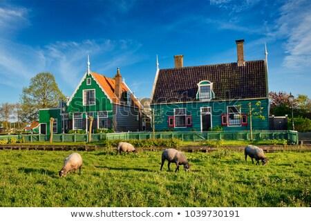 old  town of Zaanse Schans, Netherlands Stock photo © neirfy