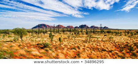 Centraal Australië panorama hemel boom hot Stockfoto © kwest