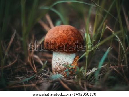 белый гриб трава большой гриб Сток-фото © romvo