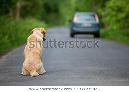 Opuszczony psa przydrożny ilustracja drogowego Zdjęcia stock © adrenalina