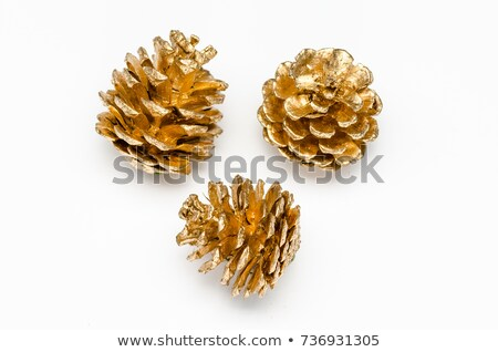 Golden pine cone Stock photo © IS2