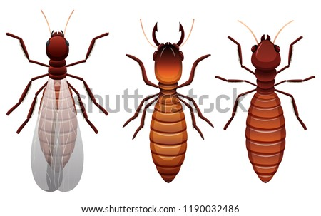 Different stages of a termite Stock photo © bluering