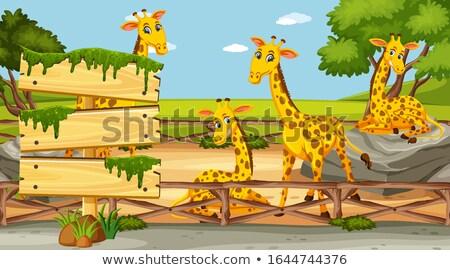 Foto stock: Quatro · fronteira · templates · bonitinho · girafas · ilustração