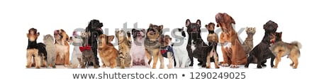 curious group of mixed pets looking up on white background Stock photo © feedough