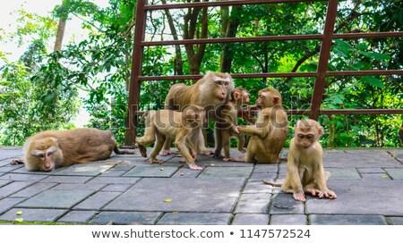 Paisagem phuket cidade ver macaco colina Foto stock © galitskaya