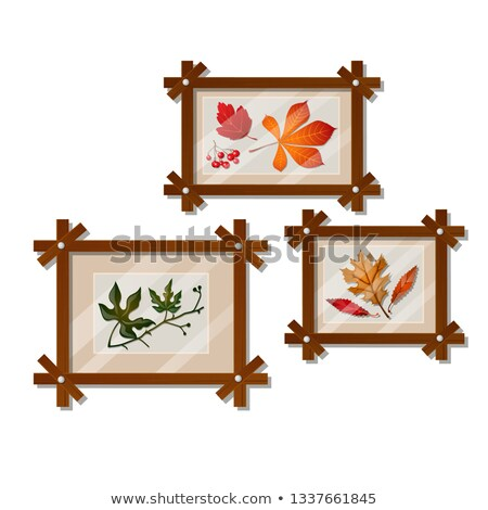 A set of wall-mounted compositions with autumn dried leaves isolated on white background. Vector car stock photo © Lady-Luck