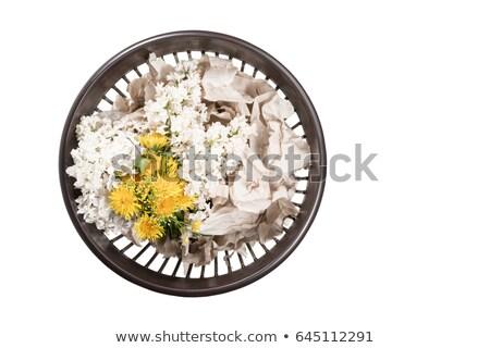 pissenlit · fleurs · panier · haut · vue · fraîches - photo stock © madeleine_steinbach