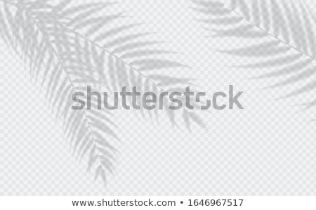 árnyékok trópusi pálmalevelek trendi kreatív terv Stock fotó © furmanphoto