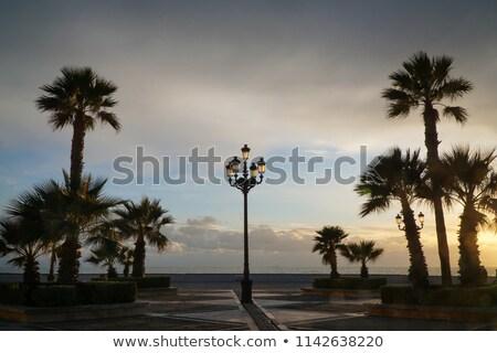 hurma · ağacı · caribbean · sahil · orman · doğa - stok fotoğraf © jakgree_inkliang