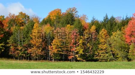 Autumn, fall landscape in park Stock photo © photocreo