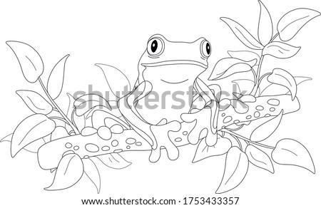экзотический · лягушка · красочный · природы · красный · тропические - Сток-фото © janpietruszka