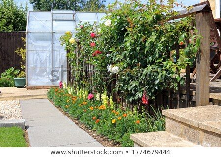 A wooden fence design with plants at the back Stock photo © bluering