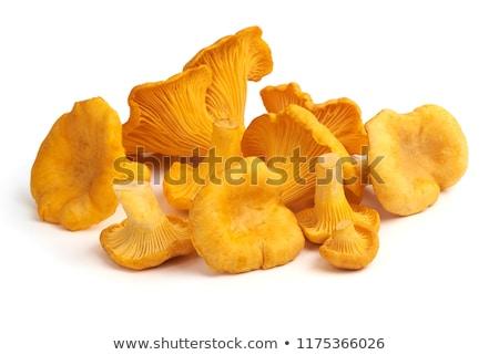 Poucos cogumelos isolado branco laranja amarelo Foto stock © digitalr