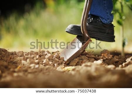 man digging in garden Stock photo © IS2