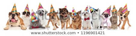 adorable cats and dogs attending a birthday party Stock photo © feedough